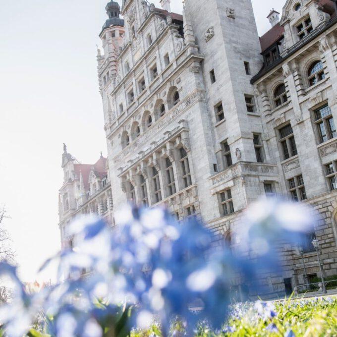 Neues Rathaus Leipzig Mit Frühblühern Im Vordergrund