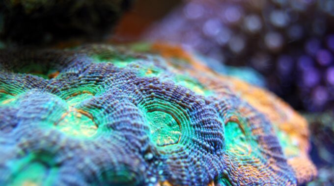 Vielfarbiges Korallenriff