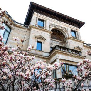 Magnolienblüten Im Frühjahr 2020