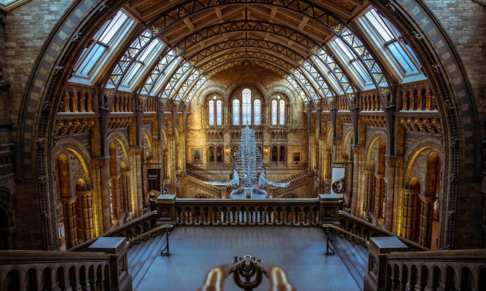 Innenansicht Des Natural History Museum In London