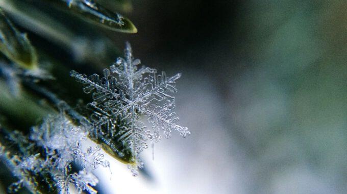Eiskristalle Auf Grashalmen