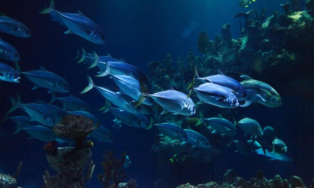 Unterwasserszene Mit Thunfischen