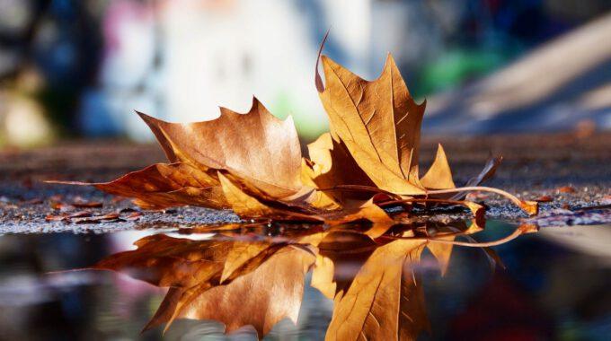 Herbstlaub Spiegelt Sich In Wasser